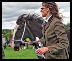 Shirehorse Colt  and handler (Develew) Tags: colt horse equine horseshow heavyhorse shirehorse hartingtonshow hartingtonwakes derbyshire derbyshiredales peakdistrict peakdistrictnationalpark england handler