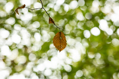 Under (Future-Echoes) Tags: 4star 2018 bokeh change depthoffield dof leaf leaves nature sparkeywood under wickhambishops witham england unitedkingdom gb