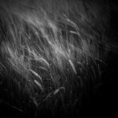"Harvest IV • <a style=""font-size:0.8em;"" href=""http://www.flickr.com/photos/110479925@N06/44604929282/"" target=""_blank"">View on Flickr</a>"