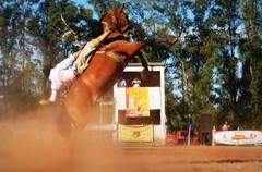 Andrinho e Emília (Eduardo Amorim) Tags: gaúcho gaúchos gaucho gauchos cavalos caballos horses chevaux cavalli pferde caballo horse cheval cavallo pferd pampa campanha fronteira quaraí riograndedosul brésil brasil sudamérica südamerika suramérica américadosul southamerica amériquedusud americameridionale américadelsur americadelsud cavalo 馬 حصان 马 лошадь ঘোড়া 말 סוס ม้า häst hest hevonen άλογο brazil eduardoamorim gineteada jineteada