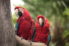 IMG_4294 (gabrielgs) Tags: holiday holiday2018 vakantie2018 camping frankrijk france zoo la fleche lafleche animals dierentuin loire