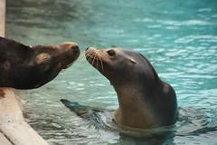 IMG_4327 (gabrielgs) Tags: holiday holiday2018 vakantie2018 camping frankrijk france zoo la fleche lafleche animals dierentuin loire