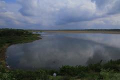 IMG_6138 (mohandep) Tags: hessarghatta lakes karnataka butterflies birding nature wildlife insects signs food