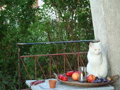 Whitie (Farmerberlin) Tags: cat lake vacation france summer2018