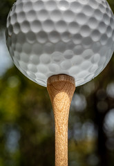 Tee it up...POV (Jack Blackstone) Tags: 2018 em1markii flickrfriday macro pov pointofview golf golfball tee underneath frombelow perspective