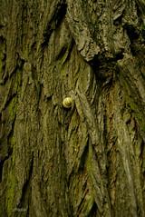 climber (LHadder) Tags: snail tree wildlife park warszawa warsaw królikarnia polska poland lhadder