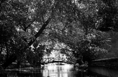 Monetchrome (singinghedgehog) Tags: 365the2018edition 3652018 day264365 21sep18 project365 mono monochrome thetford river reflection