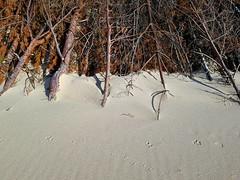 By the Baltic Sea 26 (rimasjank) Tags: sand dunes nida