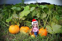 1 apple🍏 4 pumpkins🎃 (sugarelf) Tags: pandappleoutfit blythe doll pumpkins autumn garden urbancowgirl handmadeoutfit pacificnorthwest farmlands kawaii naturephotography pandapplegirl