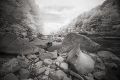 Cheat Canyon (DRCPhoto) Tags: irconverteddslr canon5d digitalinfrared sigma1224mmdghsm cheatriver westvirginia