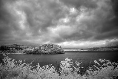 Lough Gill (Infrakrasnyy) Tags: sony alpha nex 5n ir infrared full spectrum converted conversion bw 093 black white colorless monochrome ireland sligo erie lough lake gill water reeds gloom overcast