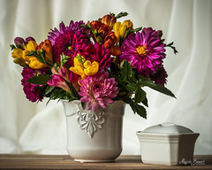 Bouquet of summer flowers (Magda Banach) Tags: canon canon80d freesia sigma150mmf28apomacrodghsm bouquet colors dahlia daisies flora flower flowers green macro nature pink plants porcelain yellow stillife