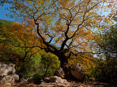 The tree (Petr Horak) Tags: greece countryside mft rock foliage tree mzuikopro m43 microfourthirds lumix outdoors hdr outdoor europe nature mirrorless