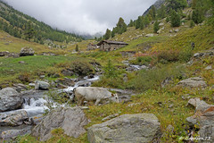 IMG_4729_DxO.jpg (Lumières Alpines) Tags: didier bonfils goodson73 mont viso tour 3841 alpes italie rando alpinisme