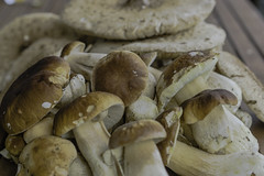 Mushrooms from the Wienerwald (a7m2) Tags: mushrooms steinpilze parasol wald wiese natur wienerwald schwammerlsuchen spas spazieren wandern dickröhrlinge boletus gemüse