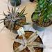 Houston Cactus & Succulent Show & Sale