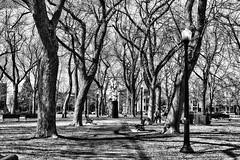 Footpath (stephaneblaisphoto) Tags: architecture bare tree branch built structure day footpath history nature no people outdoors park plant sky past way forward tranquility trunk treelined bw blackandwhite monochrome montreal quebec canada