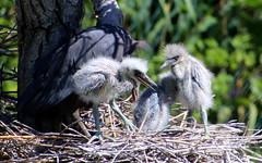 Vogelpark Niendorf (bo-joerg) Tags: vogelpark niendowrf canon eos 800d tamron18400