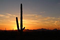 Saguaro National Park (mda'skaly) Tags: arizona usalandscapes sunset sunrise cactus saguaro usnationalpark