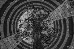 THE CIRCLE OF LIFE (Keith Ola Shoebridge (olamefein)) Tags: gasometer apartments circular tree life oxigen city dublin docklands