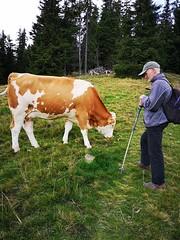 20180908Steiermark Rosenkogel02.1v16 Anstieg Kuh AngelikaMy (rerednaw_at) Tags: steiermark rosenkogel seckaueralpen kuh emyb angelikamy