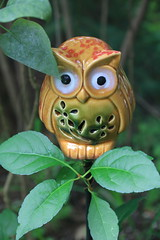Ceramic Owl and Leaves (hbickel) Tags: ceramic owl leaves canont6i canon photoaday pad