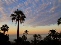 sunrise clouds in Menton (angelinas) Tags: clouds sky seaside trees silhouettes menton france cotedazur frenchriviera nature naturephotography outdoorphotography morning skyscapes europe serenity tranquil pretty