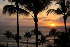 Maui Sunset (amarilloladi) Tags: pacificocean ka'anapali kaanapalibeach beach beaches kaanapali island pacific trees palmtrees palms sunsets sunset maui hawaii landscape landscapes 7dwf travel