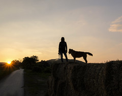 The Girl And The Dog (CoolMcFlash) Tags: person woman dog pet animal sunset dusk sunlight sun silhouette sky summer fujifilm xt2 nature frau hund haustier tier sonnenlicht sunflare sonnenuntergang sonne sonnenstrahlen abend kontur himmel sommer natur fotografie photography xf1024mmf4 r ois