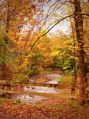 Autumn splendor (kuddlyteddybear2004) Tags: quakerrun gypsytrail alleganystatepark asp ny fall autumn creek stream brook bridge