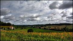 vallée de St Caprais (wiart.J) Tags: tournesols jaune champ hdr