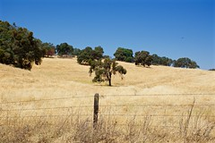 DSC_1725-a25 (stumbleon) Tags: nikondslr nikond7200 amadorcountycalifornia landscape trees california rural countryroads grassland rollinghills