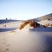 Mesquite Flat Travelers