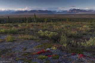 Tundra fall colors - Alaska