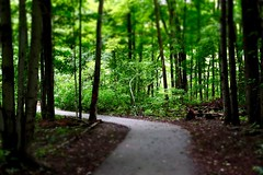 Into the Woods (Haytham M.) Tags: canada ontario rain path fog green tree trees forest woods