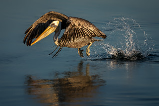 Take-off with the splash