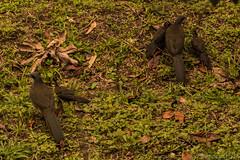 IMG_8805 (andres.robledoortiz) Tags: canon canont6 colombia colombianphotographers colombianphotographs elsalado envigado antioquia co