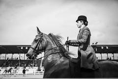 (Jen MacNeill) Tags: american saddlebred horse asb gaited equine equestrian horses bnw blackandwhite devonhorseshow horseshow