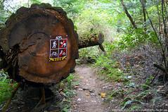 2018-08-18 Whistle Lake Trail 205 (08) (1024x680) (-jon) Tags: anacortes skagitcounty skagit fidalgoisland sanjuanislands washingtonstate washington pnw pacificnorthwest salishsea pugetsound acfl anacortescommunityforestlands whistlelake lake trail path 205 nikon nikonl22 tree douglasfir fern alder summer woods forest a266122photographyproduction sign hiking hike walk walking