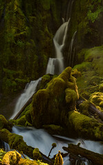 Mossy Misty Falls (Nancy King Photography) Tags: moss ferns downingfalls waterfall downingcreek willamettenf pacificnorthwest river oregon