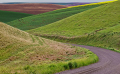 U Turn Around The Bend - The Palouse, Washington (j-rye) Tags: road landscape gravel grass farm crops soil sonyalpha sonya6000 sony a6000 ilce6000 mirrorless palouse washington