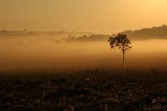 September Mists (Derbyshire Harrier) Tags: silverbirch silhouette mist clodhallmoor moorland peakdistrict peakpark derbyshire easternmoors rspb nationaltrust 2018 cobwebs september autumn morning
