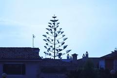 IMG_0568 Sa Rapita, Mallorca (Fernando Sa Rapita) Tags: canon eos200d mallorca sarapita tamron tamron150600 teleobjetivo plant planta agave canoneos
