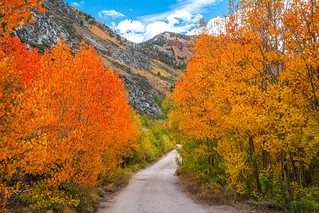 South Fork Bishop Creek High Sierras Autumn Aspens Leaves Clouds Fine Art Landscape Photography: Sony A7RII Eastern Sierras Nature: California Fall Foliage Autumn Colors Scenic Vista View! Carl Zeiss Sony T* FE 16-35mm f/4 ZA OSS Red Orange Yellow Leaves!