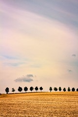 Sunset Avenue 2 (Bulda9) Tags: tree field summer sunset alley clouds agriculture abstract