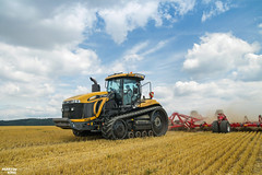 Tillage 2018   CHALLENGER // HORSCH (martin_king.photo) Tags: tillage challengermt865e horschcruiser12xl challengermt challenger horsch horschcruiser red yellow tracs trac tractractor ontracks clouds sky blue bluesky agco yesagco summerwork powerfull martin king photo machines strong agricultural greatday great czechrepublic welovefarming agriculturalmachinery farm workday working modernagriculture landwirtschaft martinkingphoto machine machinery field huge big agriculture tschechische republik power dynastyphotography lukaskralphotocz day fans work place inaction action worker eos new weather