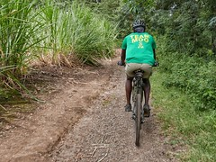 Through sugar cane plantations