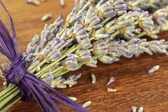 Dried Lavender (amarilloladi) Tags: lavenderstrands definingbeauty macromondays 7dwf purple flora flowers bouquet lavender