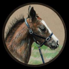 Horsey (GayleMaurer006) Tags: