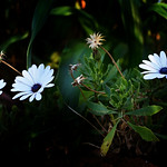 Young Flowers thumbnail